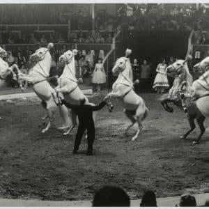 Circustheater met dieren, 1955