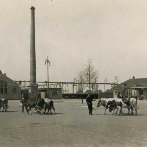 Gemeentelijk Openbaar Slachthuis, 1912